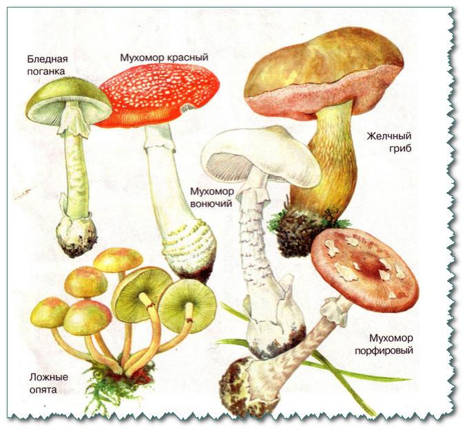 Знаете ли вы грибы и лечебные растения